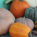 Pumpkins and Guords